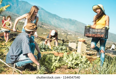 Teamwork harvesting fresh vegetables in the community greenhouse garden - Happy young people at work picking up organic vegetarian food - Focus on women faces - Healthy lifestyle concept