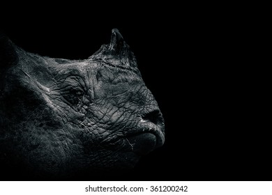 Tears of an unicorn - Indian One-Horned Rhinoceros