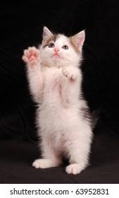 tease a little kitten