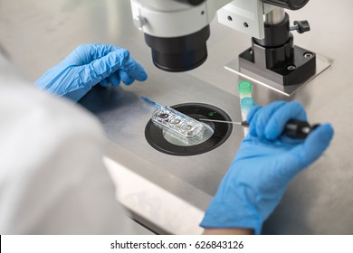 Technician in blue gloves does control check of the in vitro fertilization process using a microscope. Closeup. Horizontal.