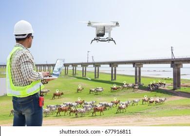 Technician farmer use computer control drone tracking the cows in smart farm, Technology 4.0 concept
