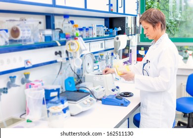 technician in the microbiology laboratory