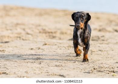 teckel beach shadow