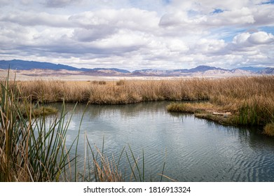 Tecopa Hot Springs in southern California on a sunny winter day.