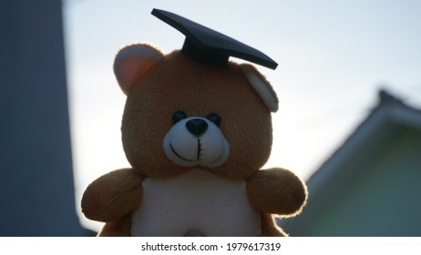 a teddy bear in an adorable graduation cap in the morning - Shutterstock ID 1979617319