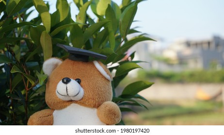 a teddy bear in an adorable graduation cap with plant background - Shutterstock ID 1980197420