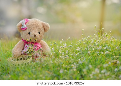 Teddy bear is collecting grass flowers in a basket in the morning happily.