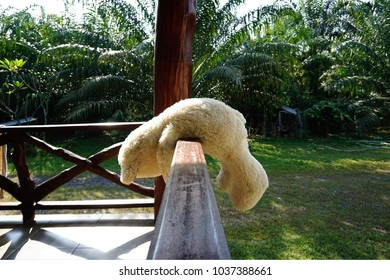 A teddy bear doll in cream color is left abandon on a wooden patio of a house with background of green trees on a sunny day.