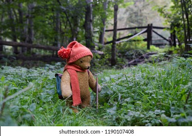 Teddy bear hiking in the forest like a child