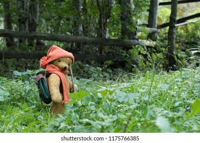 Teddy bear hiking in the forest - wears knitted scarf and cap and backpack
