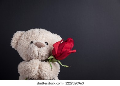 Teddy Bear holding a red rose