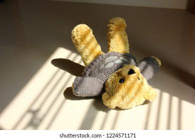 teddy bear lying on floor with shadow of window
