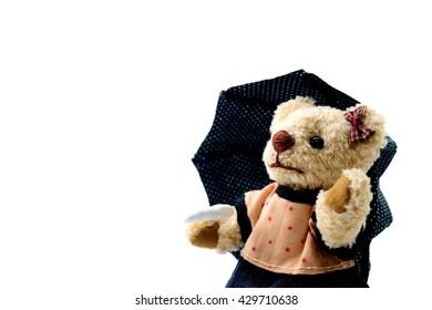 Teddy Bear of the rainy season of the day