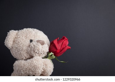 Teddy Bear with a red rose in front of a blackboard