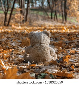 A teddy bear sits on a road covered with fallen leaves and looks into the distance, the road is flooded with sunlight.