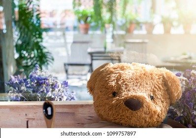 Teddy Bear Sitting chair Have flowers Have a tree sunlight background