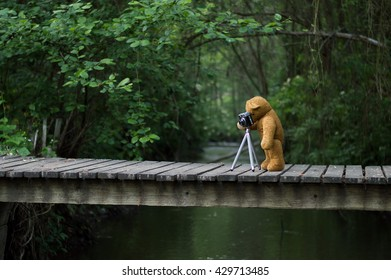 Teddy bear take photograph in the forest