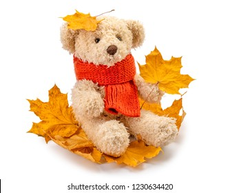 teddy bear and yellow leaves isolated on white background. Autumn concept/