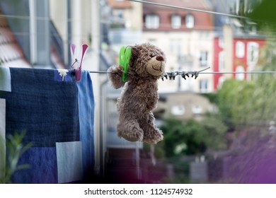 teddy dry on a clothesline