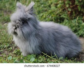 Teddy rabbit