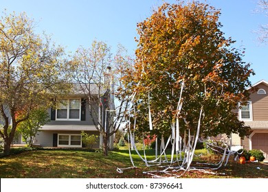 Tee Peed Tree in a residential yard