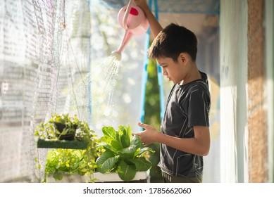 Teenager, der im Garten des Hauses Gemüse trinkt und erntet