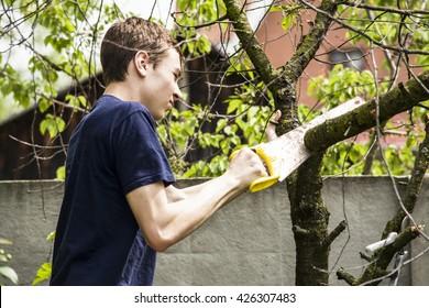 Teen cut down trees in the garden