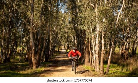Teenage boy riding fast on mountain bike on path through gum tree forest, Victoria, Australia.