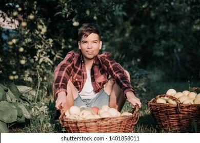 Teenage boy sitting behind big wicker baskets, full of ripe apples at the farmers garden in warm sunset light. Seasonal work concept.
