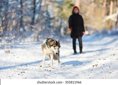 Teenage girl with a husky dog at winter time