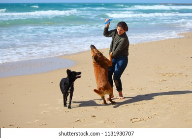 Teenage girl  playing with her dogs on the beach