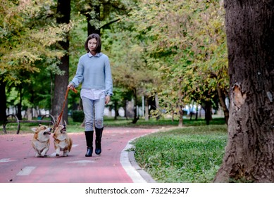 Teenage girl walking two welsh corgi pembroke dogs