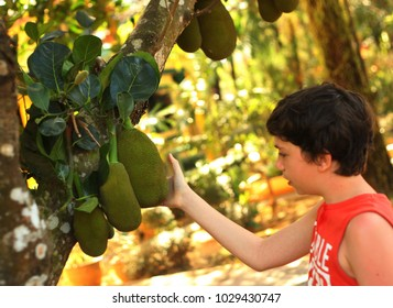 teenager boy with whole jackfruit on the tree close up outdoor photo