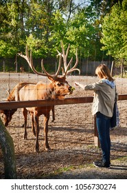 A teenager feeds a deer in a zoo