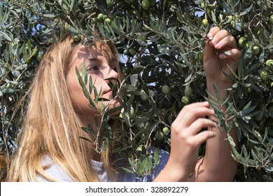 Teenager harvest green olives, portrait. Israel. Middle east.