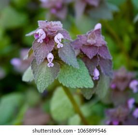 Teeny Tiny Blossom