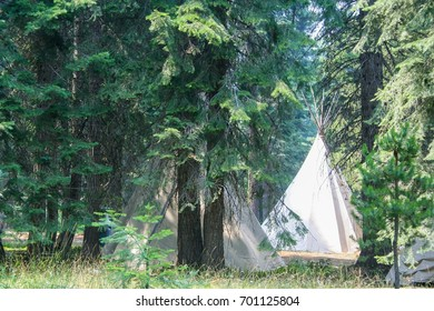 Teepees in pine trees.