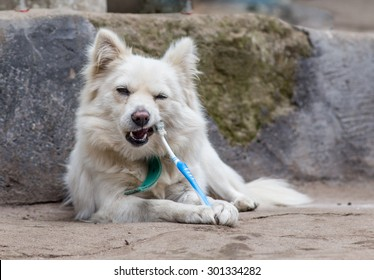 teeth cleaning dog with toothpaste