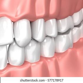Teeth Gum Human Mouth Anatomy - 3d illustration