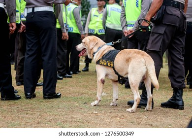 Tegal, Indonesia - 08th 11 2014: A Police K9 Dog on Duty
