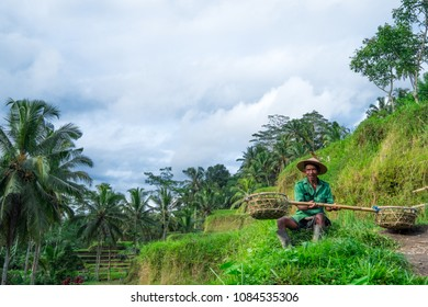 Tegalalang, Bali / Indonesia - December 26 2017: Portrait of an old worker in the Tegalalang Rice Terrace