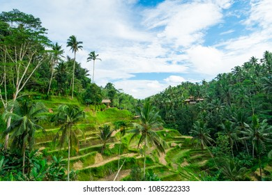 Tegalalang, Bali / Indonesia - December 26 2017: Wide view of the Tegalalang Rice Terrace during a clear afternoon