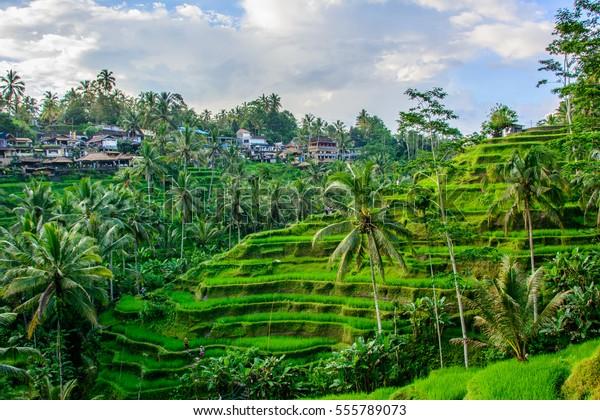 Tegalalang rice terraces, Ubud, Bali, Indonesia