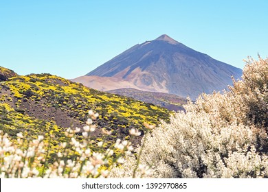 The Teide National Park in Tenerife offers a special atmosphere in May with many flowering shrubs and plants in rich colors. A great contrast to the barren stone and volcanic landscape and the green-y