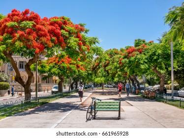 TEL AVIV, ISRAEL - JUNE 05, 2017 : Red flowers trees at boulevard Rothschild in Tel Aviv, Israel.