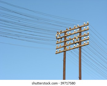 Telegraph lines with a blue sky on the background. Location: Rosario city, Argentina