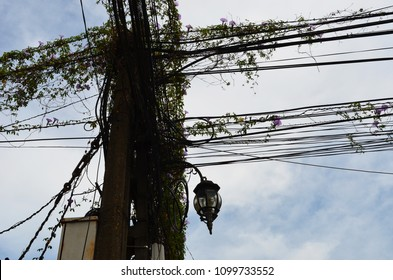 A telegraph pole with dozens of cables tangled together, covered with a vine which has purple flowers. A black metal lamp is visible, as well as a meter box. They are silhouetted against a cloudy sky
