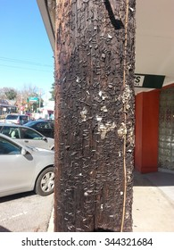 Telephone pole with hundreds of staples