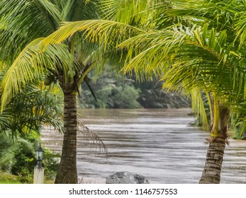 A telephoto image of the Khao Saming River framed by palm trees in Trat Province, eastern Thailand