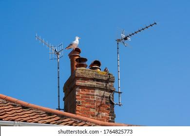Television aerials on a chimney against a blue sky.  Aldeburgh, Suffolk. UK